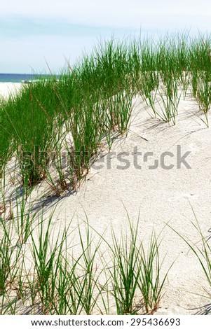 Grass and white sand dunes on the beach on a hot summer afternoon.