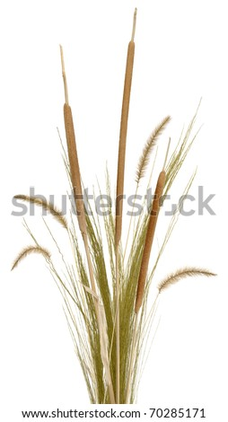 Grass Arrangement 2 - stock photo