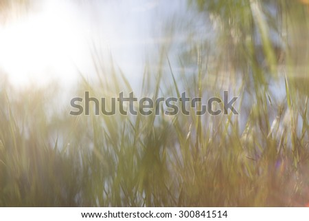 grass at dawn in the sun