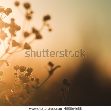 Grass at sunset. Beautiful retro effect. Photo to use screensavers and backgrounds. Dry grass in the sun.