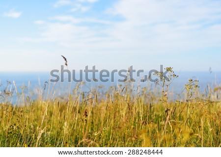 Grass at the coast in Paldiski, Estonia - stock photo