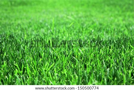 Grass background closeup photo - stock photo