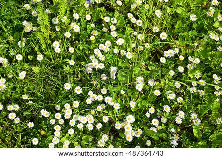 grass and flowers background. Beautiful Flowers Grass Background Flowers Throughout Grass And Flowers Background W
