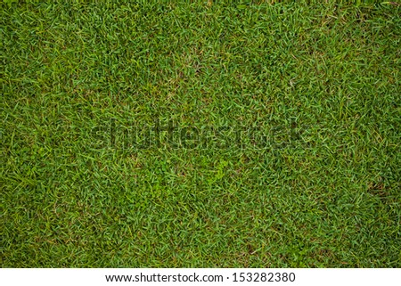 Grass background, fresh green soccer turf