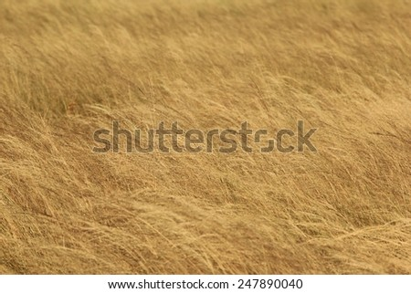 Grass Background - Natural Textures and Colors from Nature - stock photo