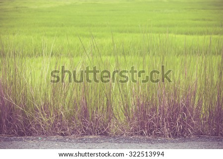Grass between road with purple filter - stock photo