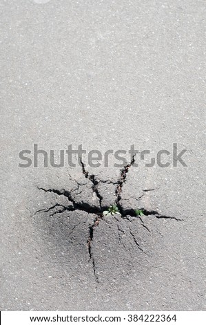 Grass broke through the crack in the pavement. Power of nature