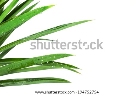grass bush with drop on white background - stock photo