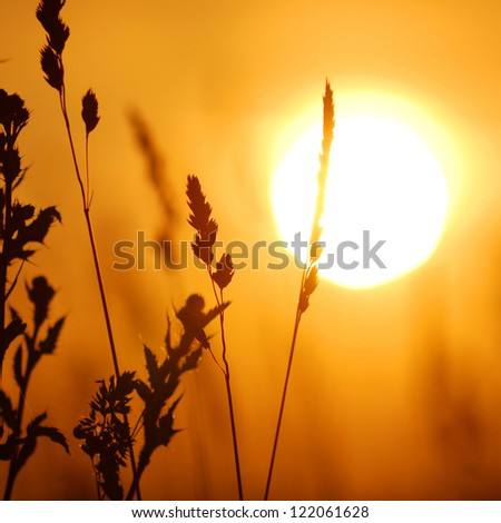 grass close-up against setting sun - stock photo