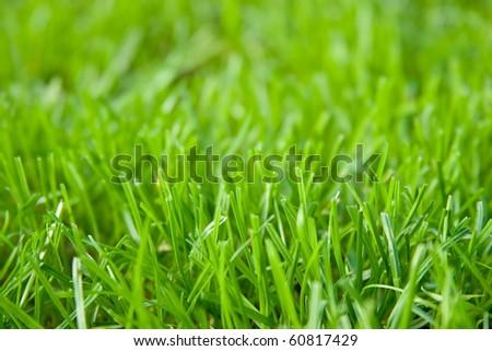 grass closeup background - stock photo