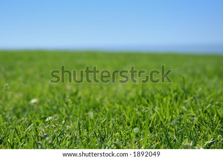 grass closeup, ocean and sky - stock photo