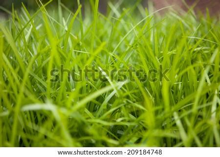 Grass closeup photograph  - stock photo