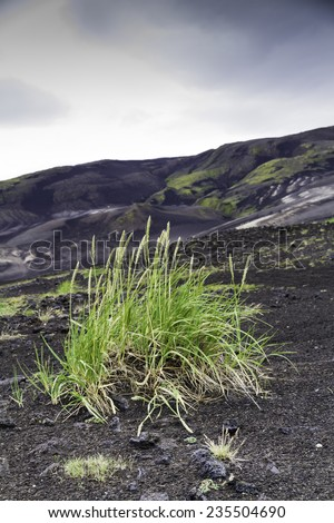 Grass colonising a bleak lava landscape, near landmannalaugar, Iceland. - stock photo