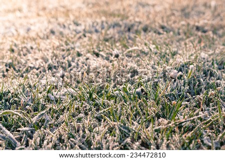Grass cover in morning frost - stock photo