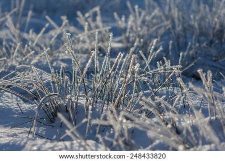 Grass covered in snow a sunny winter day - stock photo