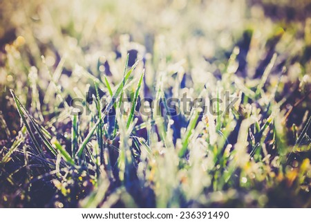 Grass covered with hoarfrost  - stock photo