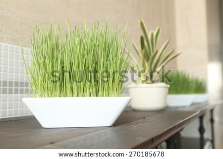 grass decor - stock photo