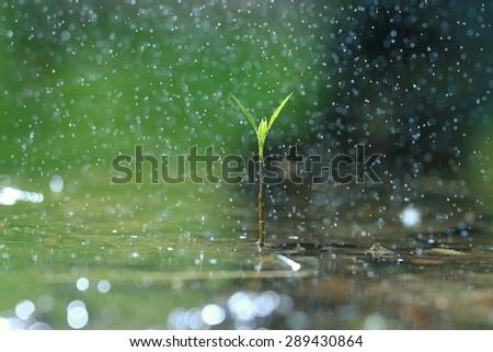 grass dew rain macro fresh green eco - stock photo