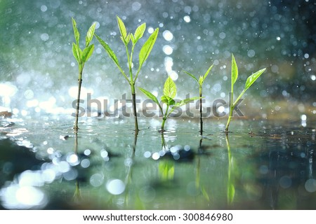 grass dew rain macro fresh green eco - stock photo