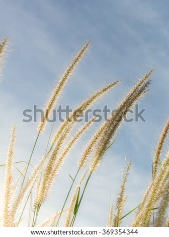 grass field and sunrise .soft focus