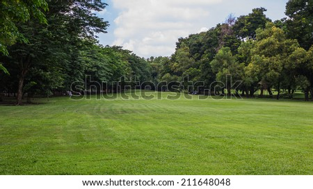 Grass field and tree