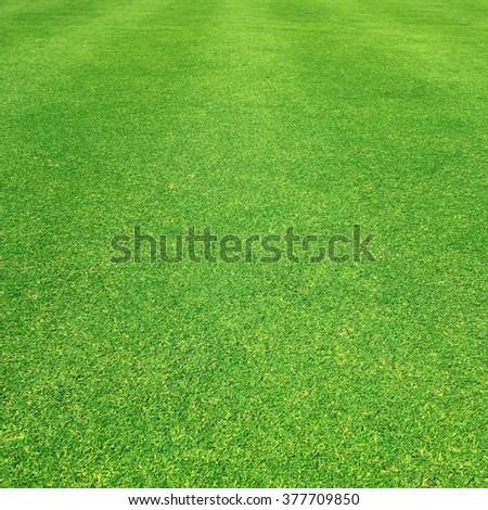 Grass field / Green grass background - stock photo