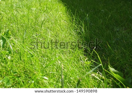 Grass field in shadow - stock photo
