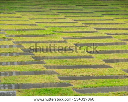 grass field pattern - stock photo