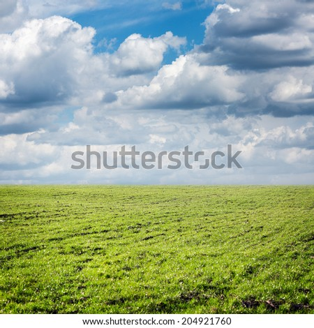 grass field under blue sky - stock photo