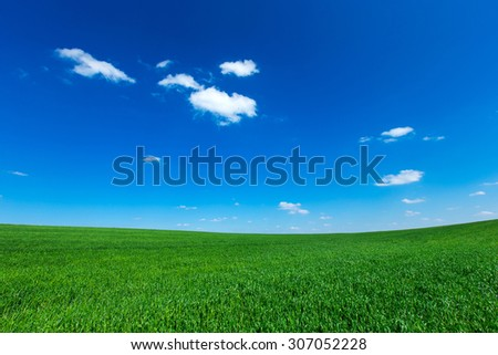 grass field under blue sky - stock photo