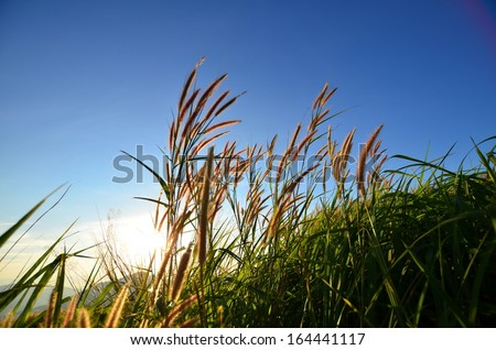 Grass Fields with Sunlight on the Mountain