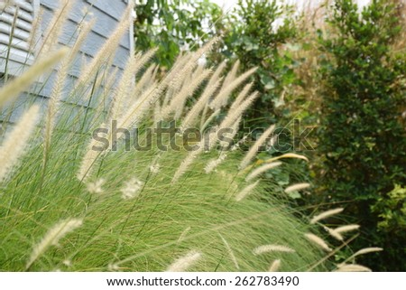 Grass flower - stock photo