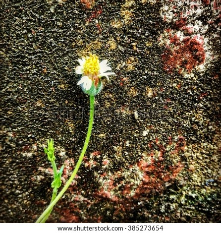 Grass flower andOld concrete wall for background - stock photo