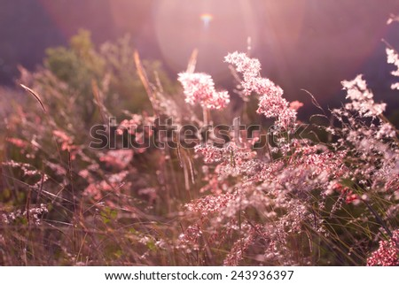 Grass Flower before the sun is getting set Background