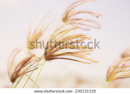 grass flower close up - oil painting effect - stock photo