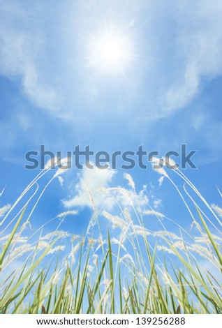 Grass flower field on blue sky. - stock photo