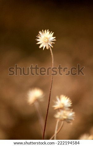 Grass flower field on sunlight