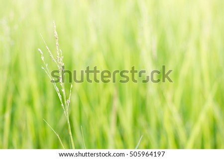 Grass flower in green meadow at valley with sunlight in the morning.