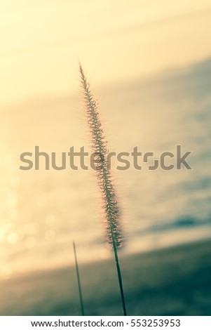 grass flower on sunset blurred vintage style for background