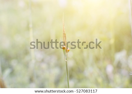 Grass flower on the meadow at sunlight nature background spring with ladybug