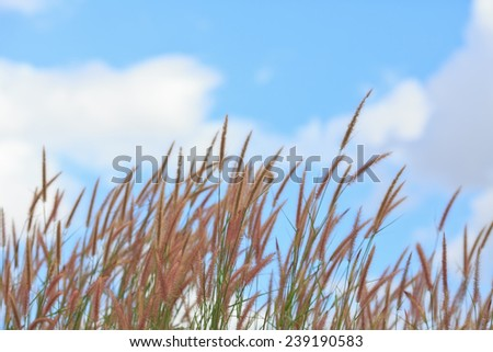 Grass flowers background.