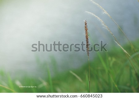 Grass flowers in the wild