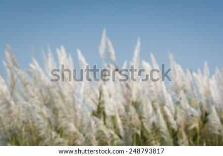 Grass flowers with blue sky background,blur