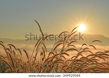 Grass fog and the morning sun light. - stock photo