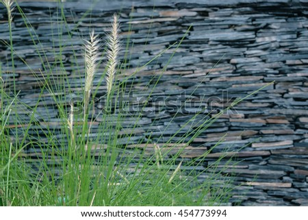 grass/grass flower with blurred pattern of decorative slate stone wall surface - stock photo