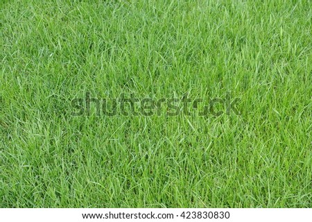 Grass, Grass Texture and Background, Nature in Green  - stock photo