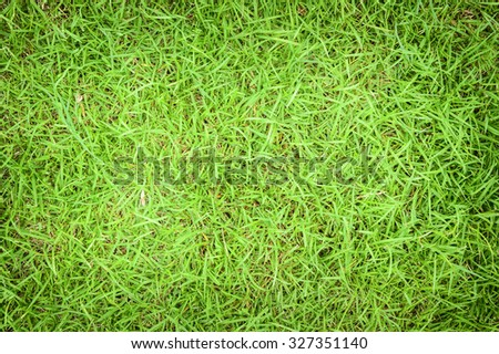 Grass green backgrounds