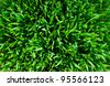 Grass. Green lawn poison, kind from above - stock photo