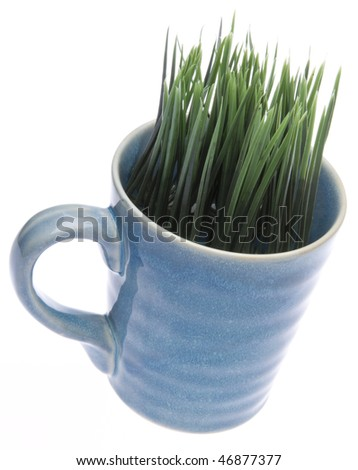 Grass growing from a coffee mug isolated on white with a clipping path.