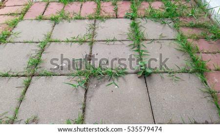 Great Grass Growing In The Cracks Between Garden Tiles